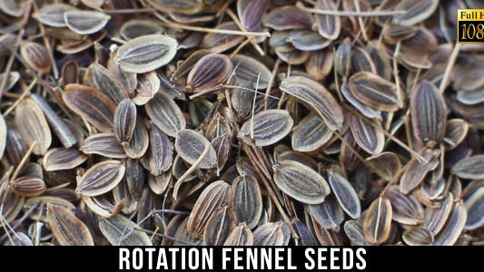 Thumbnail for Fennel Seeds 2