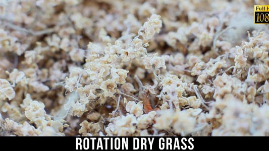 Thumbnail for Rotation Dry Grass