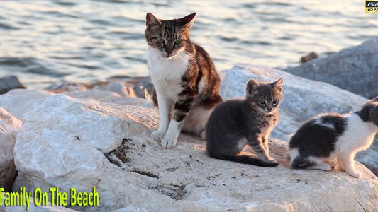 Thumbnail for Cat Family On The Beach