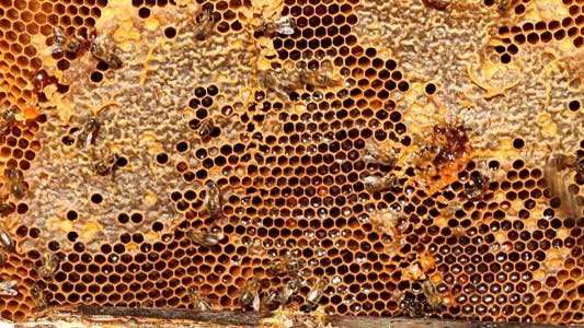 Thumbnail for Showing Honeycomb