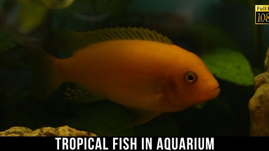 Thumbnail for Tropical Fish In Aquarium 12