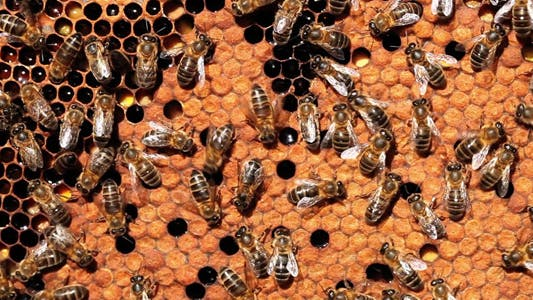 Life On Beehive