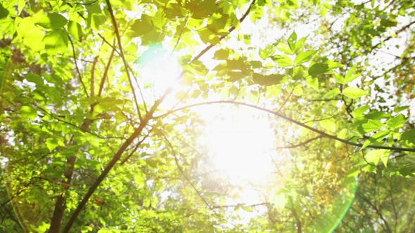 Thumbnail for Sun Rays Through the Green Leaves