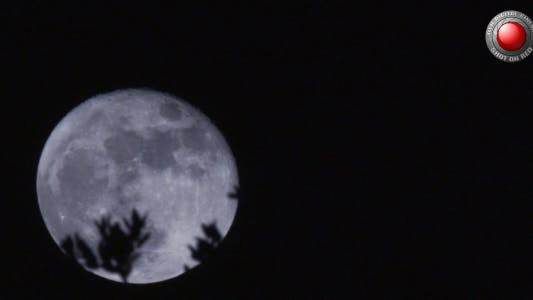 Thumbnail for Moon Behind The Bush 3