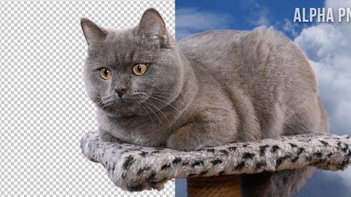 Katze auf transparentem Hintergrund