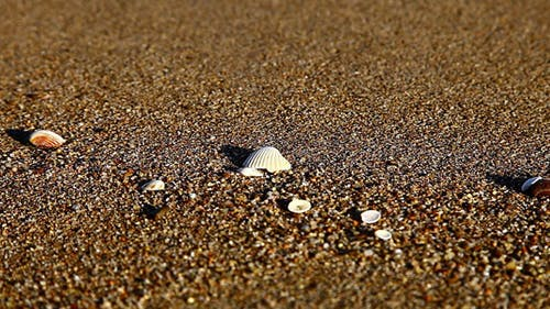 shell am strand