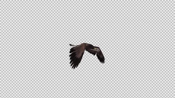 Steppe Eagle - Gliding and Flying Loop - Side Angle