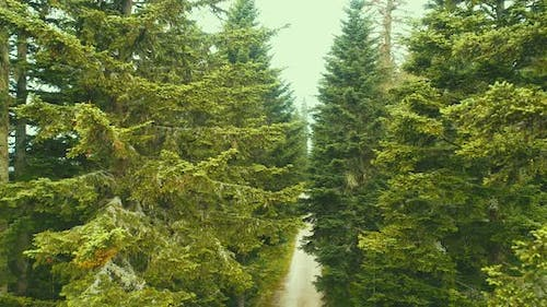 Aerial Shot of a Road Surrounded By a Pine Forest