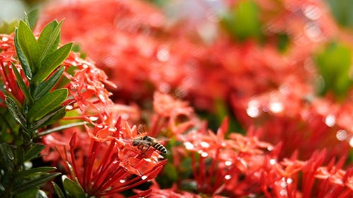 Bee Story 01