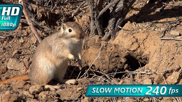 Thumbnail for Gopher Pricked up His Ears