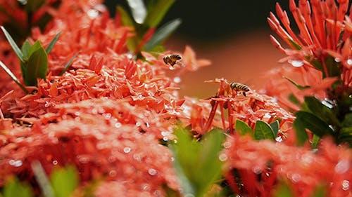 Bee Story 02