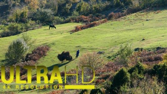 Thumbnail for Donkey Cart 1
