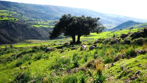 Thumbnail for Beautiful Green Landscape on Cyprus. Extreme Wide Shot of Mountains Covered with Trees and Grass