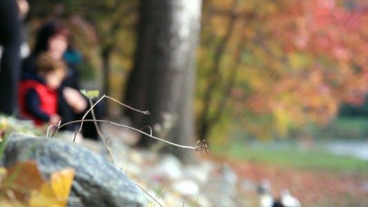 Thumbnail for Herbst