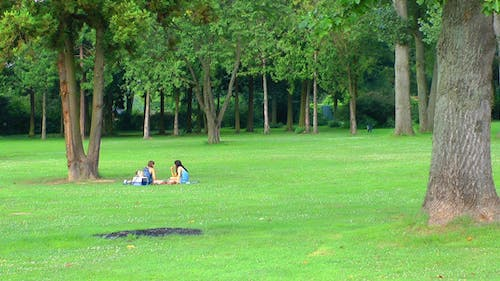 Picnic on Grass in Green Nature