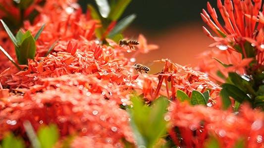 Bee Story 03