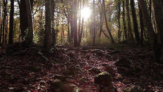 Sunrise Autumn Forest