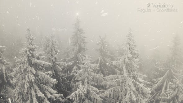 Thumbnail for Foggy Winter Forest