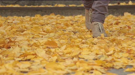 Thumbnail for Legs and Autumn Leaves