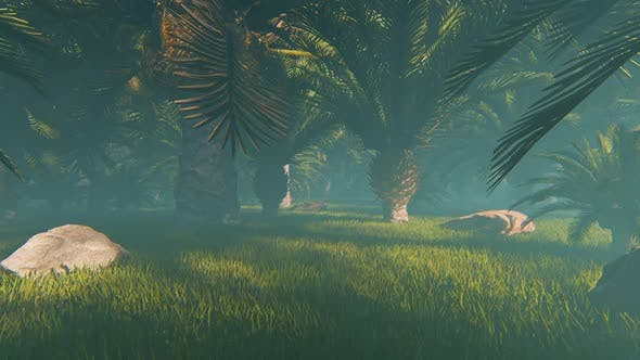 Thumbnail for Fog At Field Of Palms