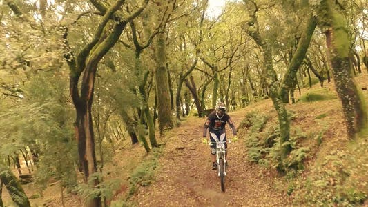 Thumbnail for Bike Forest