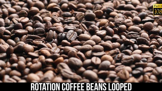 The Coffee Beans 14