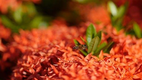 Bienengeschichte 05