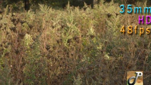 Goldenrod Flowers In Fall Season
