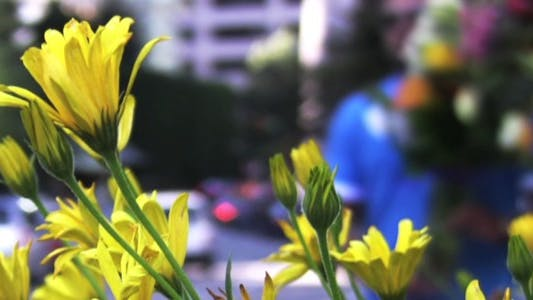 Thumbnail for City Life - Street Flowers - HD