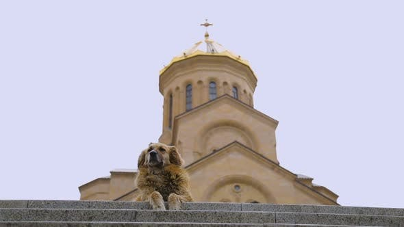 Thumbnail for Homeless Dog Sitting Against Church Background, Concept of Charity, Benevolence