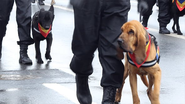 Policemen with Dogs