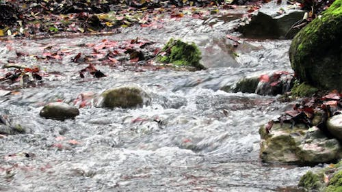 Mighty Creek in Autumn Panoramic View