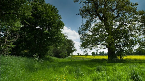 Thumbnail for Beautiful Tree English Countryside Field