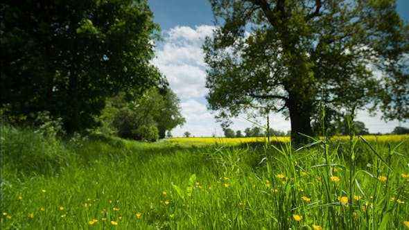 Thumbnail for Beautiful Tree French Countryside Field