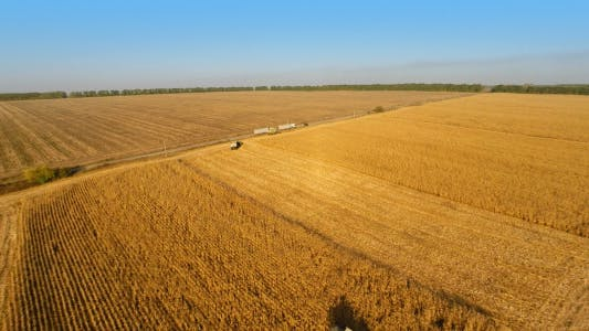 Thumbnail for Harvesters Work on Cornfield 2