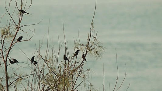 Thumbnail for Birds Preening by The Sea