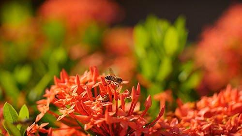 Bee Story 06