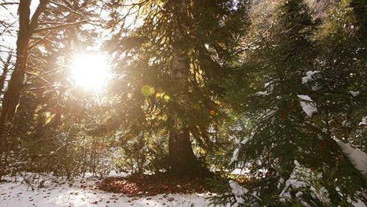 Thumbnail for Winter Forest With Sun