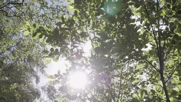 Thumbnail for Forest Foliage