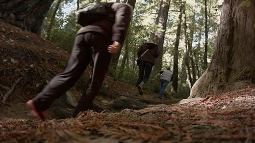 Harter Spaziergang im Wald