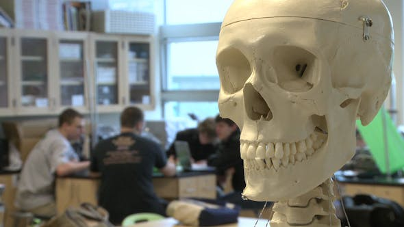 Cover Image for Skeleton In Science Class (2 of 3)