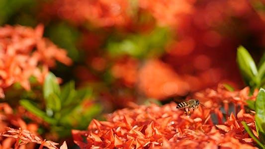 Bee Story 07