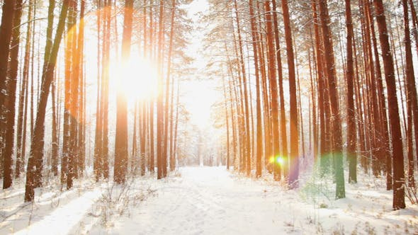 Thumbnail for A Walk in the Winter Woods