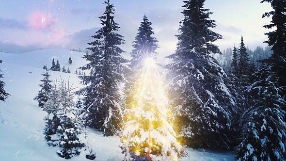 Thumbnail for Christmas Tree in the Forest