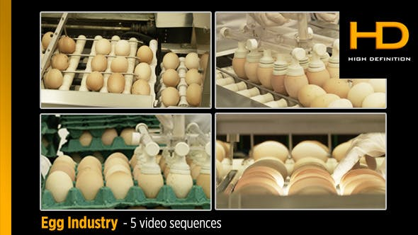 Thumbnail for Egg Industry