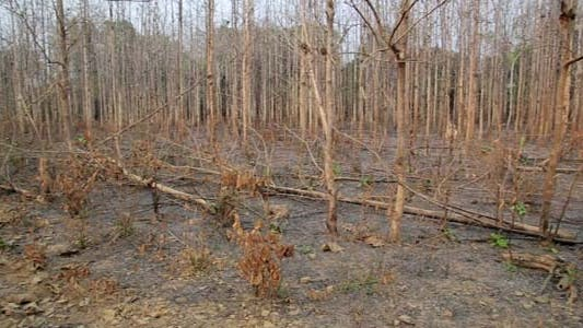 Thumbnail for Deforestation, After Forest Fire, Natural Disaster