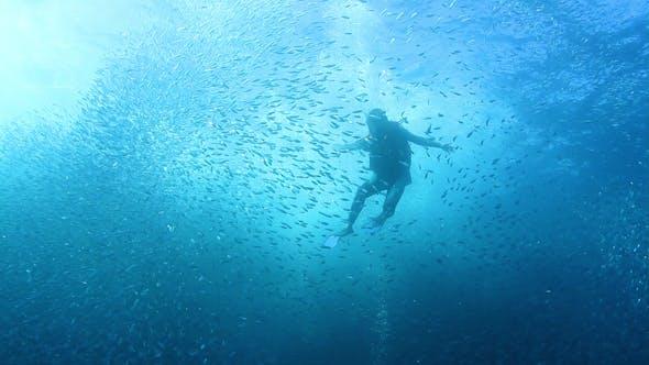 Thumbnail for Amazing Mexico Diving Baja California Sur