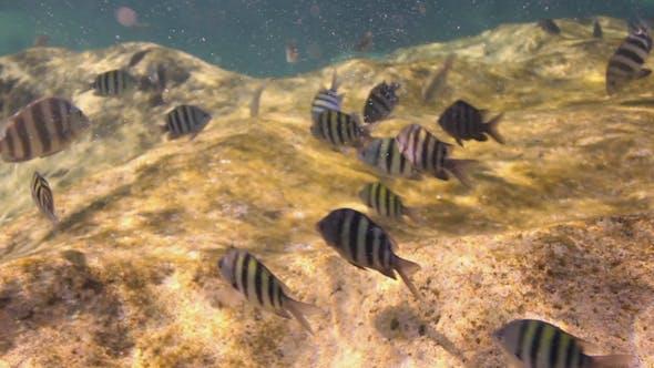 Thumbnail for Schnorchel Unterwasser Caribbean Beach Mexico 2