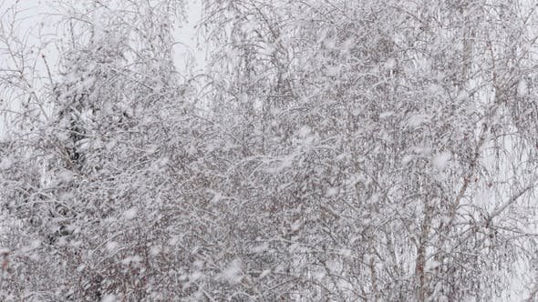Thumbnail for Snow Falling In A Forest Winter Storm