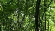 Vertical Video of a Natural Landscape During the Day in the Forest in Summer